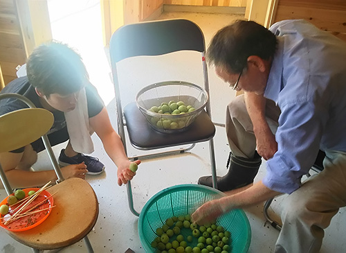 大川村梅収穫祭